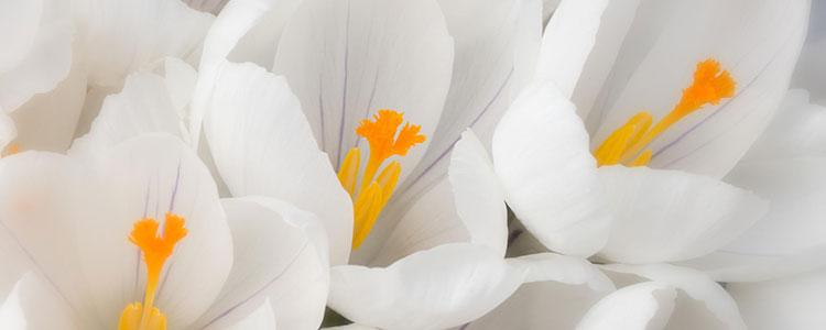 Белый цвет символ