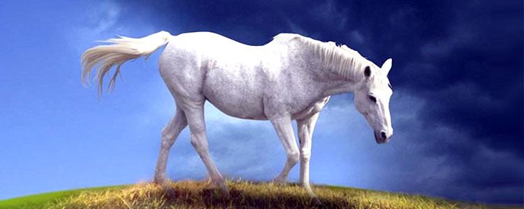 Белый конь символ