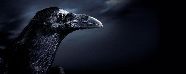 Чёрный ворон символ