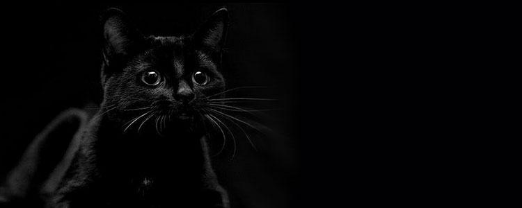 Черная кошка символ