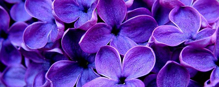 Фиолетовый цвет психология