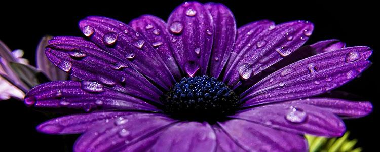 Фиолетовый цвет символ