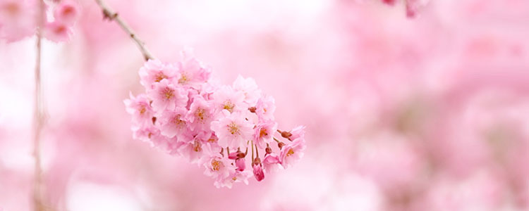 Розовый цвет символ
