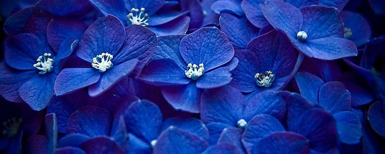 Синий цвет в психологии