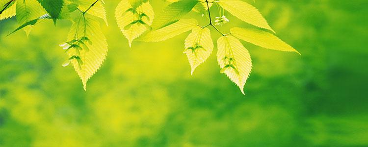 Зеленый цвет психология