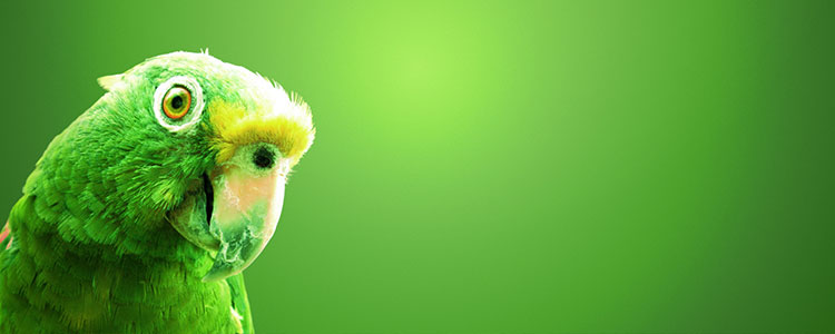 Зеленый цвет символ