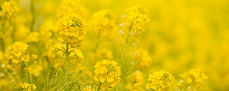 Желтый цвет в психология