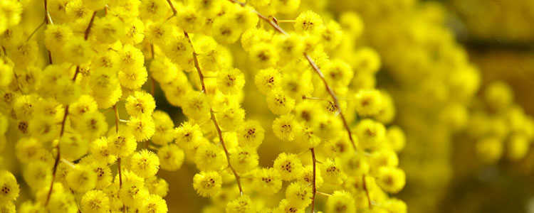 Желтый цвет символ